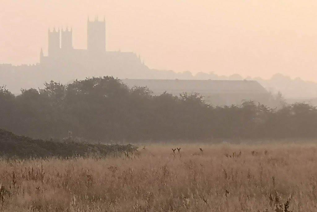Deer in fields near Lincoln