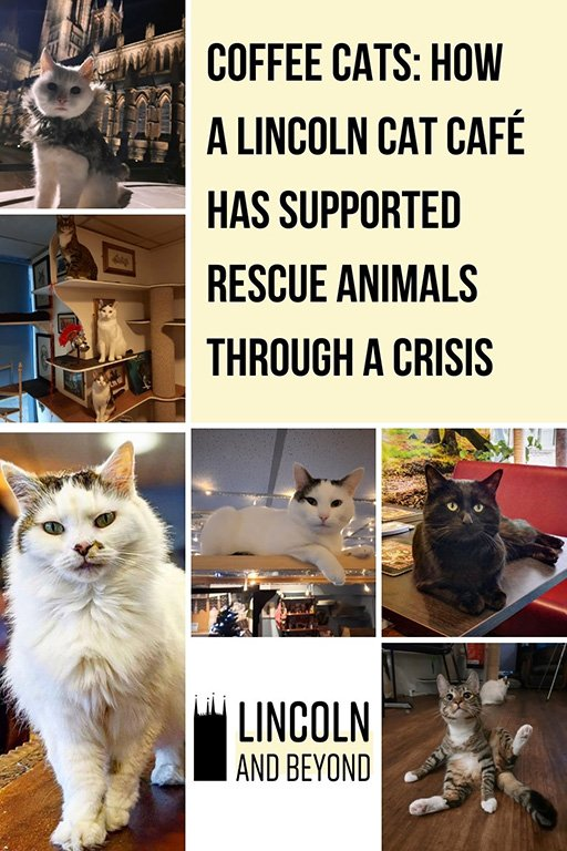 Coffee Cats, the first cat café in Lincoln, rescues its animals from shelters. The owners have innovated to support the cats through crisis. #catcafe #catcafelincoln #coffeecats