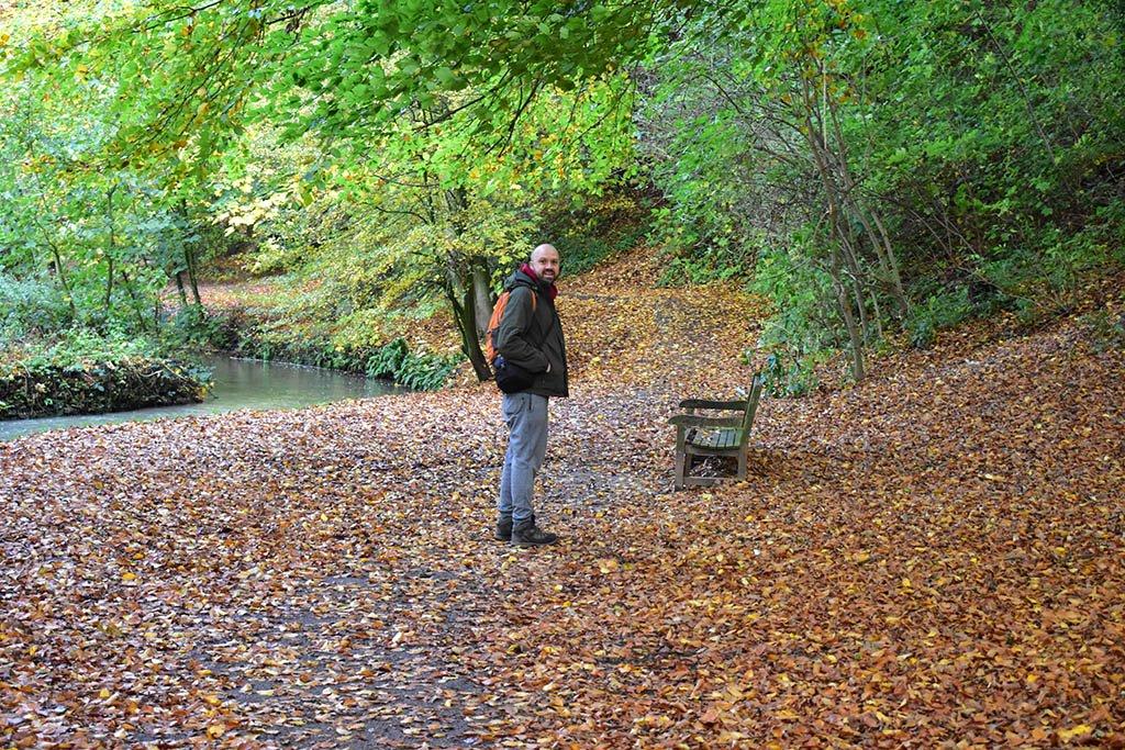 Woodland at Hubbard's Hills Louth