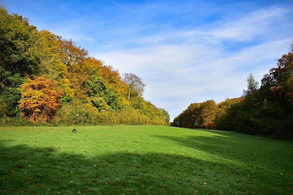 Hubbard's Hills grasslands