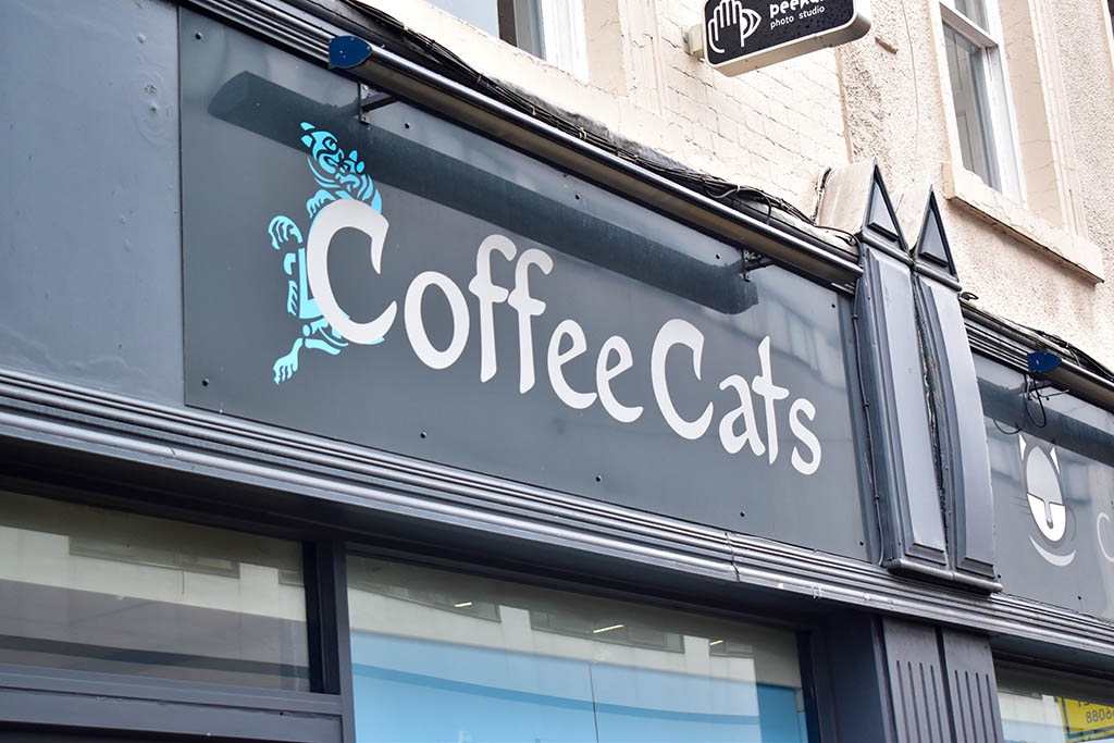 Coffee Cats Lincoln sign