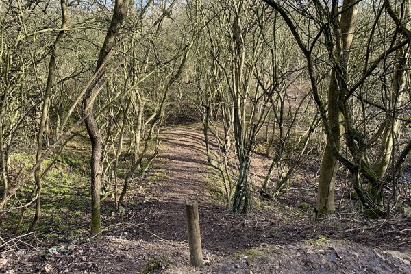 Greetwell Hollow Nature Reserve walks in Lincoln