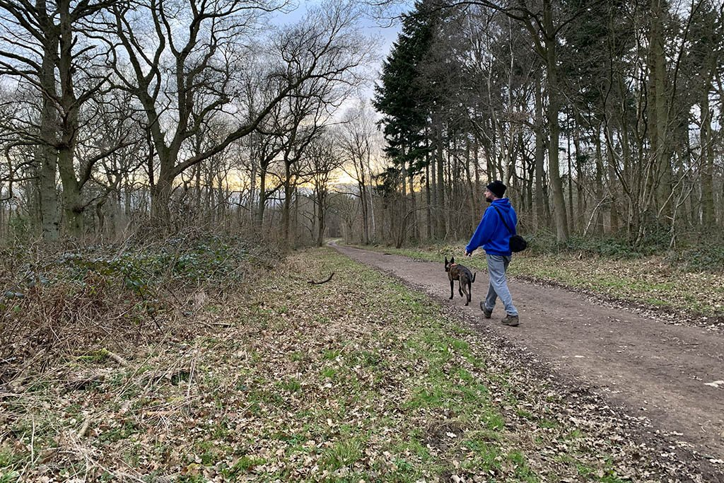 Skellingthorpe Old Wood dog walks in Lincoln