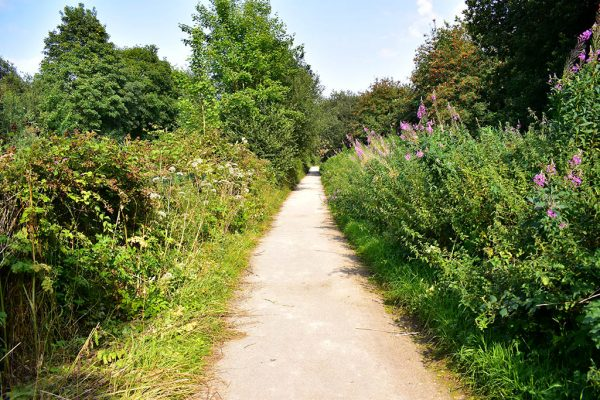 Whisby Nature Park walks in Lincoln