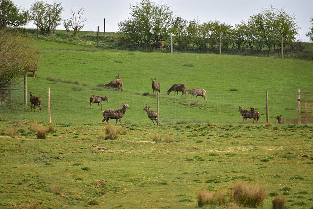 Lindsey Trail north route Lincolnshire Wolds deer