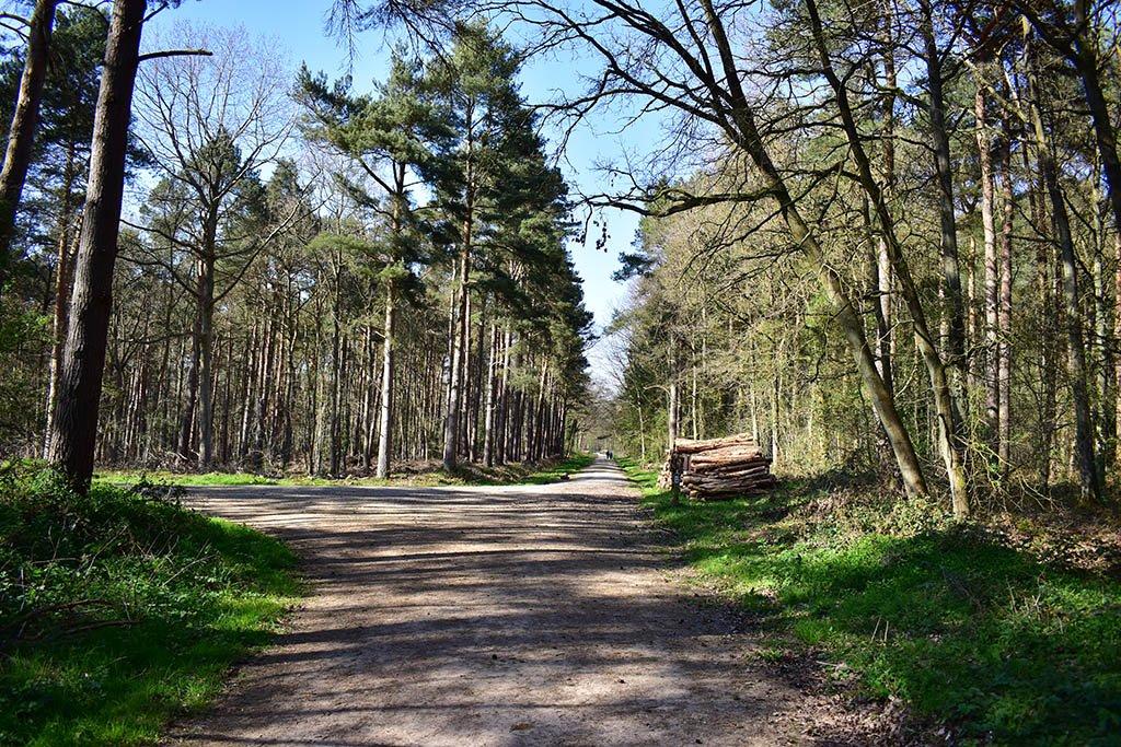 Willingham Woods logs