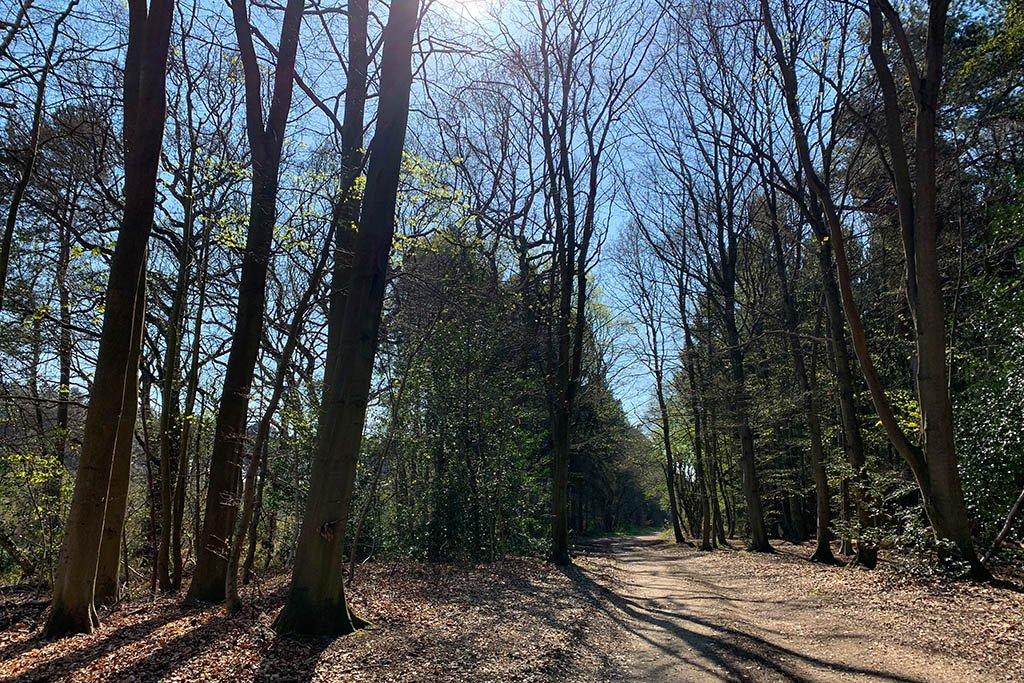 Willingham Woods path